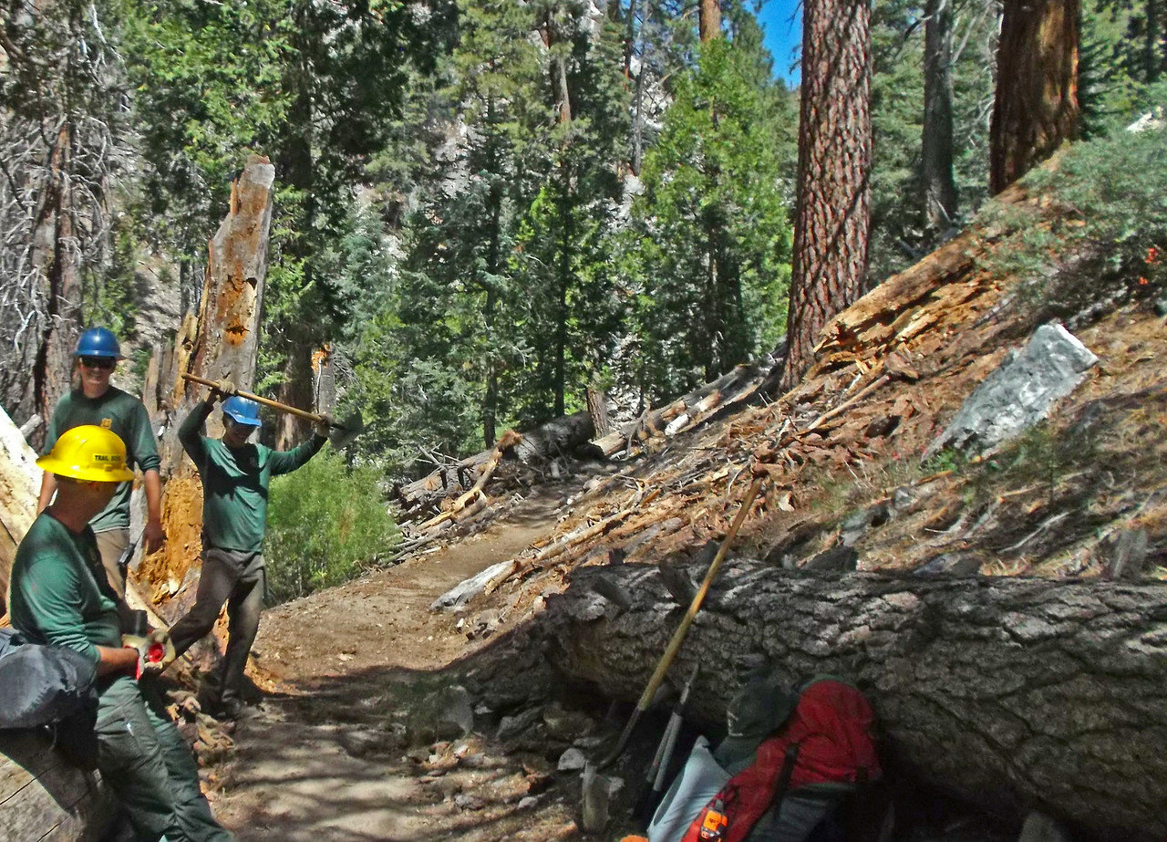 Tree 3 below Halfway Camp - after.