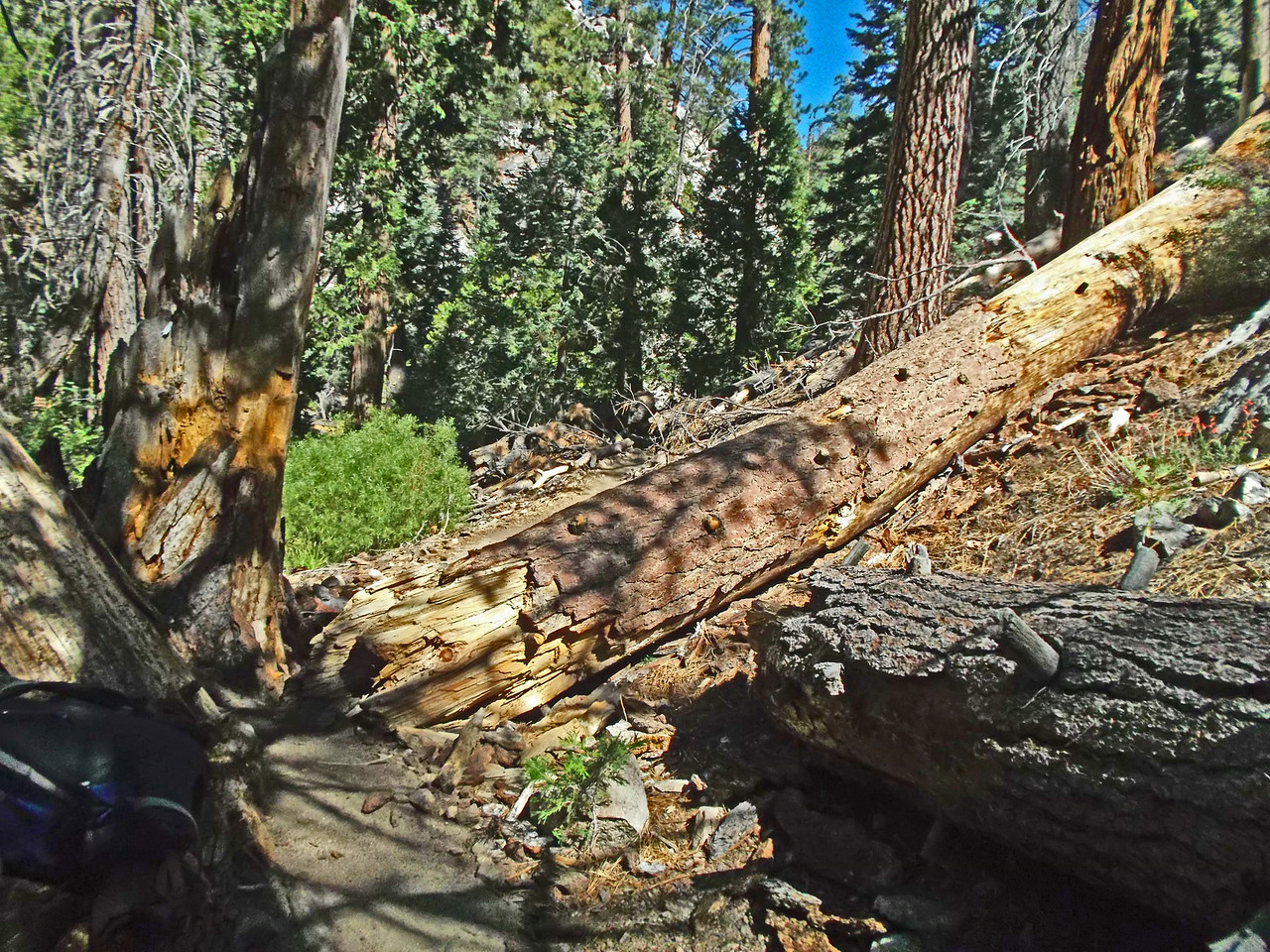 Tree 3 below Halfway Camp - before.
