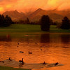 duck pond 4x6 copy 2