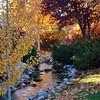 Autumn copy 2