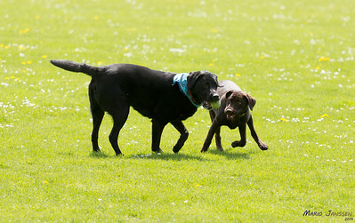 SHAPE Dog Playgroup