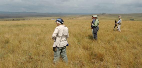 Grassland birding by FIELD GUIDES Brazil participant Peter Bono