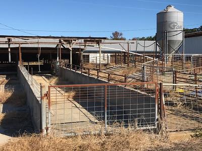 WALTERS PIG FARM EXTERIOR HOLDING PENS