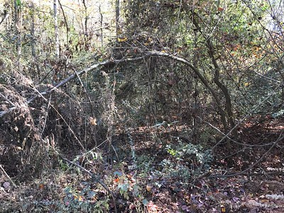 WOODS AND CULVERT BY WALTERS PIG FARM
