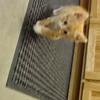 Kitten mews