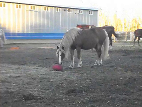 Scooter and the red ball
