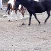 Spreading hay