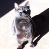 Kitty chase the shiny
