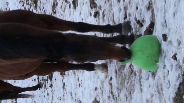 Primo, green jollyball