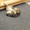 Kitten wrestle