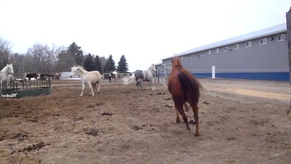 Pasture 3 romp around