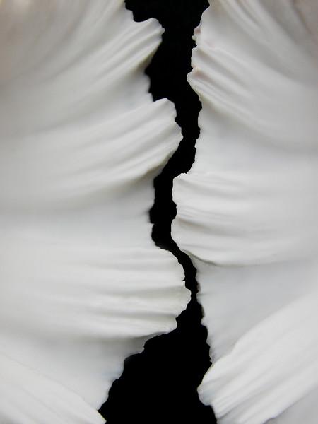 Shells, 20x30 framed print