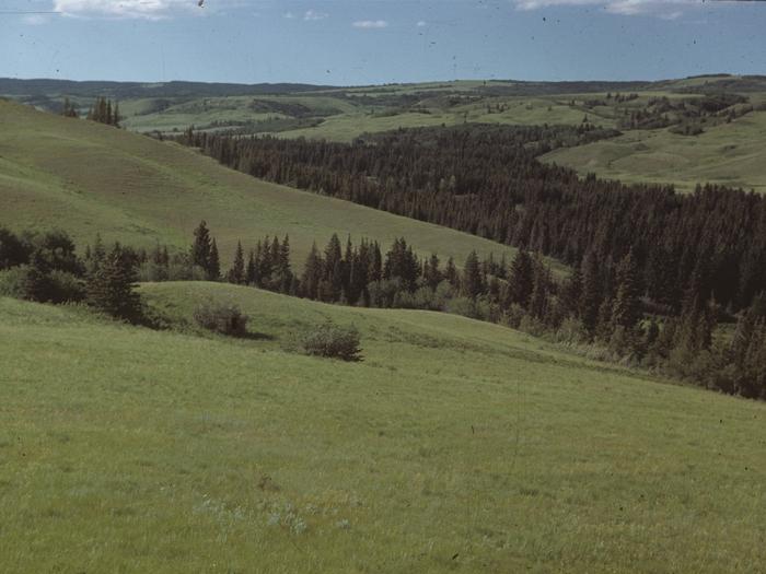 cypresslandscape