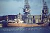 SEESCHWALBE (Hamburg) - IMO5101914 - Cargo - DEU/565/50 Scheeps Foxhol, No.87 - 48.5 x 8.2 - Hans Jurgen Tiedemann - still trading as ANITA (PAN) - Boston, to unload fertiliser, 12/80.
