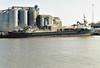 SEA KESTREL (Georgetown) - IMO9006459 - Cargo - CYM/2225/93 Yorkshire Drydock Co., Hull, No.328 - 77.7 x 11.8 - Torbulk Shipping, Grimsby - Kings Lynn, loading grain on Alexandra Quay, 01/11/07.