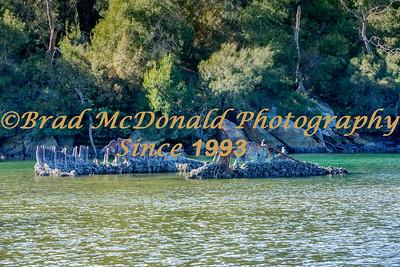 BRAD McDONALD SHIPWRECKS  SPC201607130002