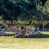 BRAD McDONALD SHIPWRECKS  SPC201607130021