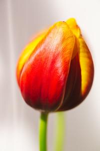 2020_01_23- KTW_macro-flowers_101-01web