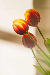 2020_01_23- KTW_macro-flowers_071-02-web