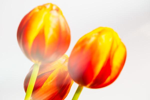 2020_01_23- KTW_macro-flowers_127-01-web