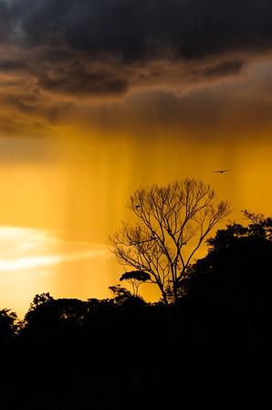 Rain Column in the Amazon