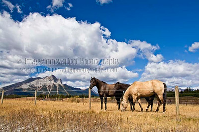 CANADIAN ROCKIES - Crowsnest Pass, Alberta Horses grazing in front of mountains [horses_5858]