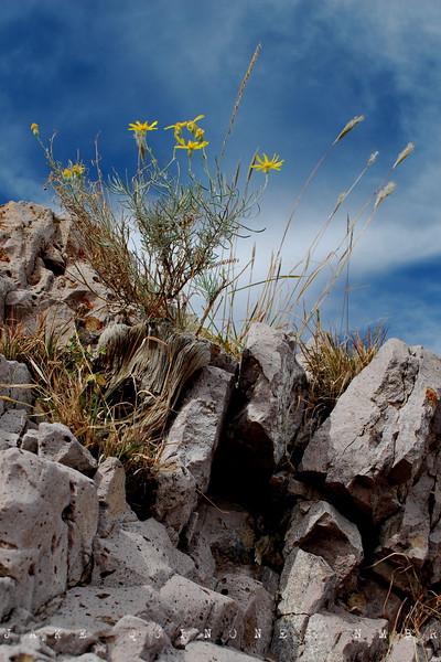 Sierra de las Uvas NM