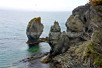 NEWFOUNDLAND - TRINITY BAY Sea stacks seen from the Skerwink Trail [skerwink_7021]