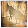 DogWaitingByDoor_Leistner_10x10