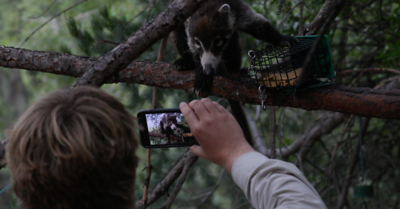 The always-helpful Tom teaches the coati about smartphone technique ...