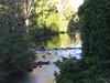 Platypus creek-2960549774-O