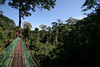 """Crossing a stream where we've seen Chestnut-naped Forktail from the canopy walkway, we head for the highest platform. <div id=""""caption_tourlink"""" align=""""right""""> [photo © guide Richard Webster]</div>"""