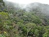 """We'll get into lovely montane cloud forest, which is distinctively shorter and full of ericaceous shrubs. We usually climb 2-2.5 kms along the trail, which takes us from 6400' to around 7400'.  <div id=""""caption_tourlink"""" align=""""right""""> [photo © guide Rose Ann Rowlett]</div>"""