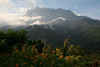 """But it's back at the mid-elevations of Kinabalu that we'll spend the majority of our time. <div id=""""caption_tourlink"""" align=""""right""""> [photo © guide Richard Webster]</div>"""