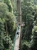 Canopy walkway, BRL (bor11a-RAR)