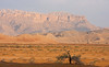 "A scenic pre-dusk outside of Buraimi, Oman. <div id=""caption_tourlink"" align=""right""> [photo © guide George Armistead]</div>"