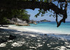"Similan Island (Ko Miang), home to the Nicobar Pigeon <div id=""caption_tourlink"" align=""right""> [photo © guide Rose Ann Rowlett]</div>"