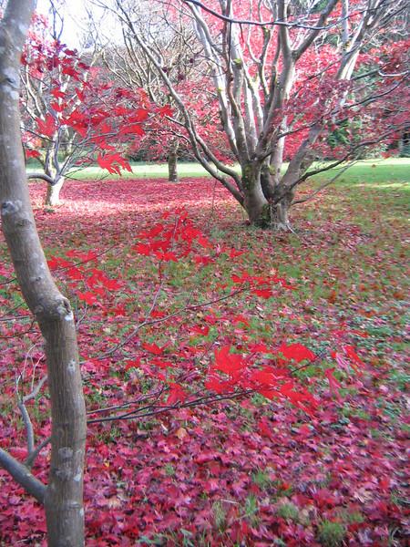 "JFK Arboretum <div id=""caption_tourlink"" align=""right"">[photo © participant Jade Lovell]</div>"