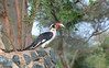 Von der Decken's Hornbill by participant Fred Dalbey