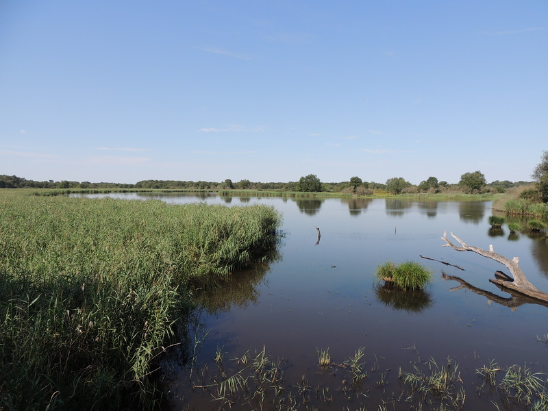 The reserve at Etang de Beaumont should give us plenty of waterbirds (and more) to look for. (photo by Megan Edwards Crewe)