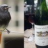 Common varieties: Black Redstart and Chinon. Photos by Megan Edwards Crewe.