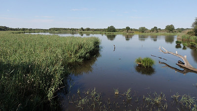 Etang de Beaumont should give us plenty of waterbirds to look for. Photo by Megan Edwards Crewe.