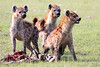 "Spotted Hyenas <div id=""caption_tourlink"" align=""right"">[photo © participant Paul Thomas] </div>"