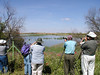 A nice morning of birding at Pedro Munoz, one of many important lagoons for wildlife in the La Mancha region.