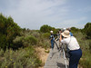 Enjoying some Sylvia warblers in the scrub in Donana National Park.