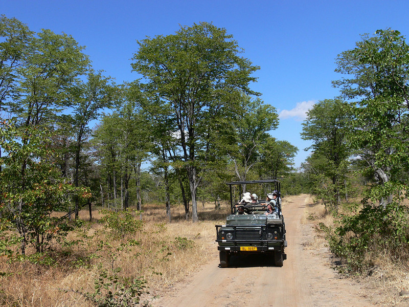"One of the visions of birding Africa is being in an open-top Land Rover driving on dirt roads in the bush. Guess what, this vision is not far from the truth on some of our tours! These vehicles provide birders with great viewing opportunities. Here is our group on the Mopane Forest game drive. <div id=""caption_tourlink"" align=""right""> [photo © participant Marge Barrett]</div>"