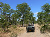 """One of the visions of birding Africa is being in an open-top Land Rover driving on dirt roads in the bush. Guess what, this vision is not far from the truth on some of our tours! These vehicles provide birders with great viewing opportunities. Here is our group on the Mopane Forest game drive. <div id=""""caption_tourlink"""" align=""""right""""> [photo © participant Marge Barrett]</div>"""