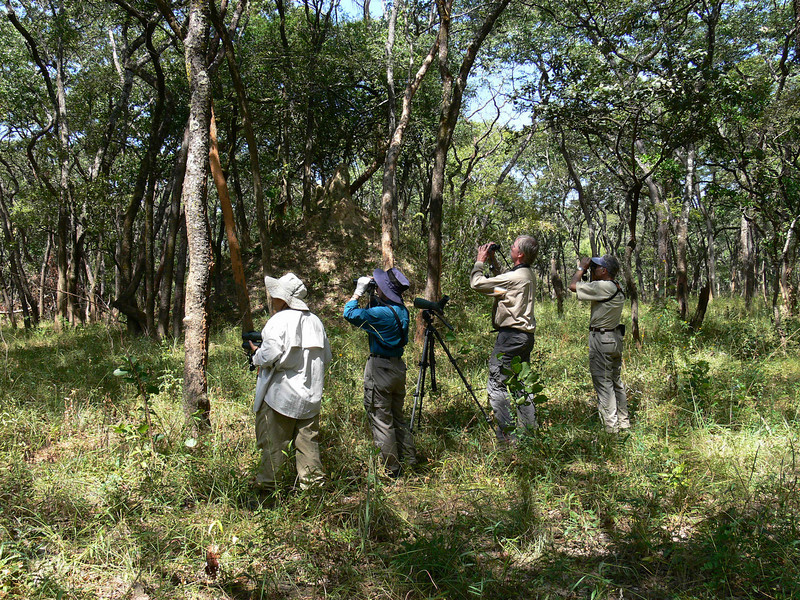 "One of our groups birding the Miombo woodland <div id=""caption_tourlink"" align=""right""> [photo © participant Marge Barrett]</div>"
