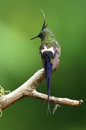 Hummingbirds II 600x800