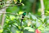 Jamaica likewise makes a wonderful quick winter getaway for many birders. The island nation boasts at least 27 endemic birds, among them its national bird, Streamertail. This evocative image of a male Red-billed Streamertail was taken by Maureen Phair.